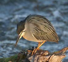 Shy Heron by Herman Greffrath