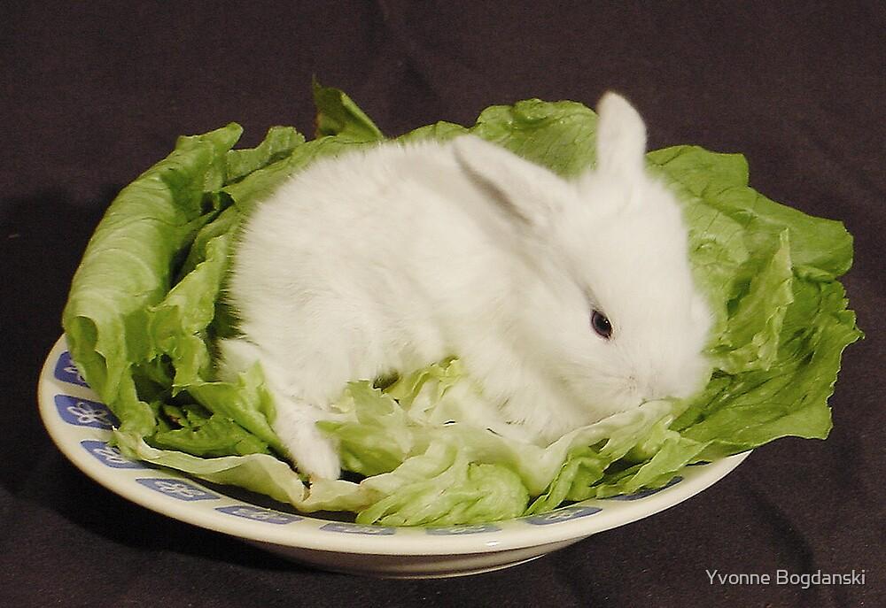 bunny by Yvonne Bogdanski