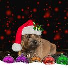 Border Terrier In Santa Hat With Bauble Ornaments by Moonlake