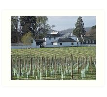 photoj Australia Tas-winery Art Print
