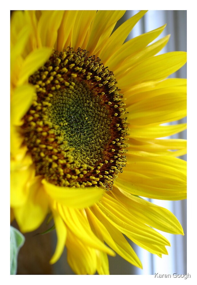 Sunflower by Karen Gough