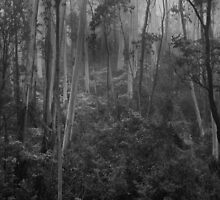 Experiments in Processing # 5 - Mount Wilson NSW - The HDR Experience by Philip Johnson
