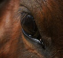 Equine Eye by EndotaGraphics