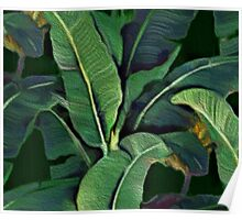 Banana Leaves (painting) Poster