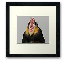 Monkey Bored Framed Print