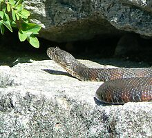 snake by cristacolby