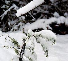 Christmas Twig by Edward A. Lentz