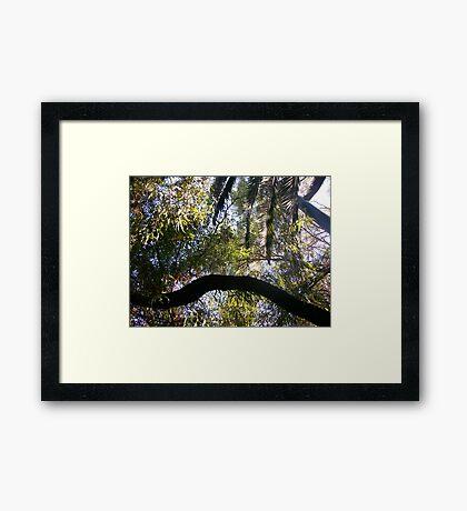 jungle adventure Framed Print