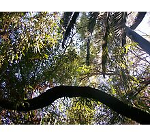 jungle adventure Photographic Print