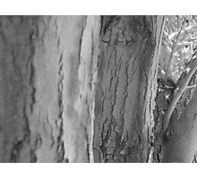 mother's nature  Photographic Print