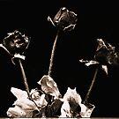 Dead Roses by Nando MacHado