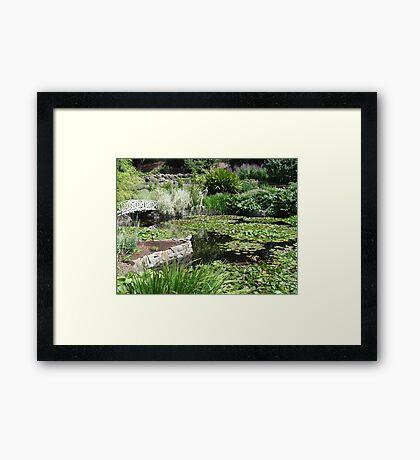 australia-tasmnia botanical gardens Framed Print