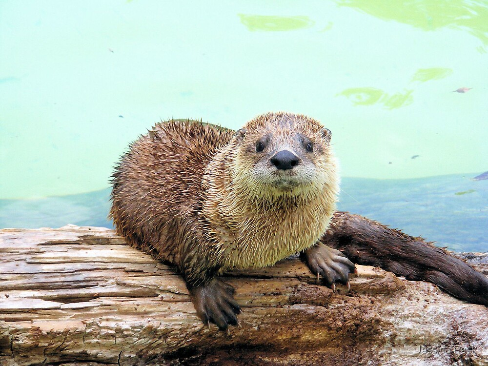 Happy Little Otter by Jessica Peck