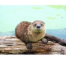 Happy Little Otter Photographic Print