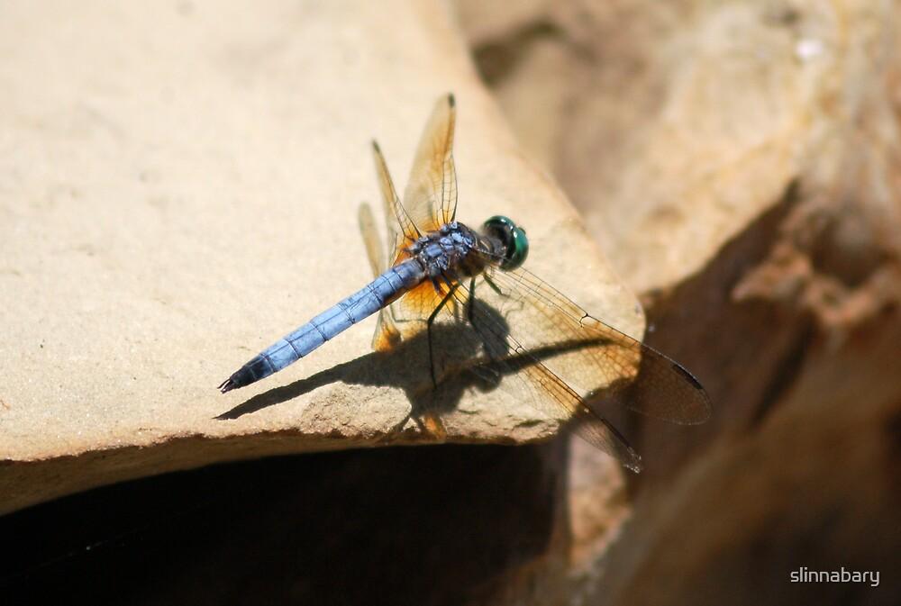 dragonfly by slinnabary