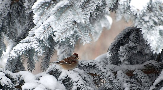 Winter Wonders by GailDouglas