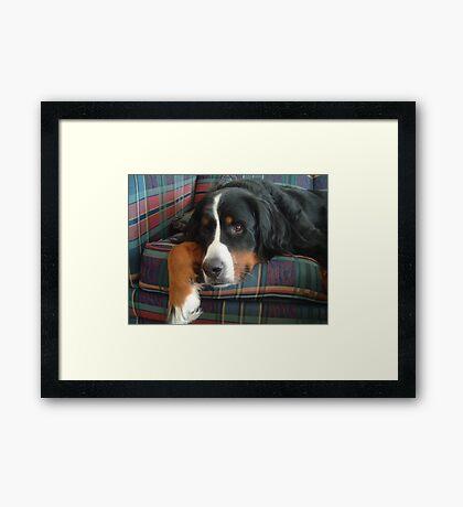 Faithful Friend Framed Print