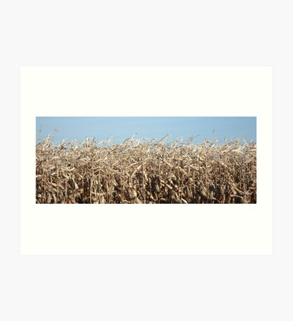 Corn for Harvest Art Print