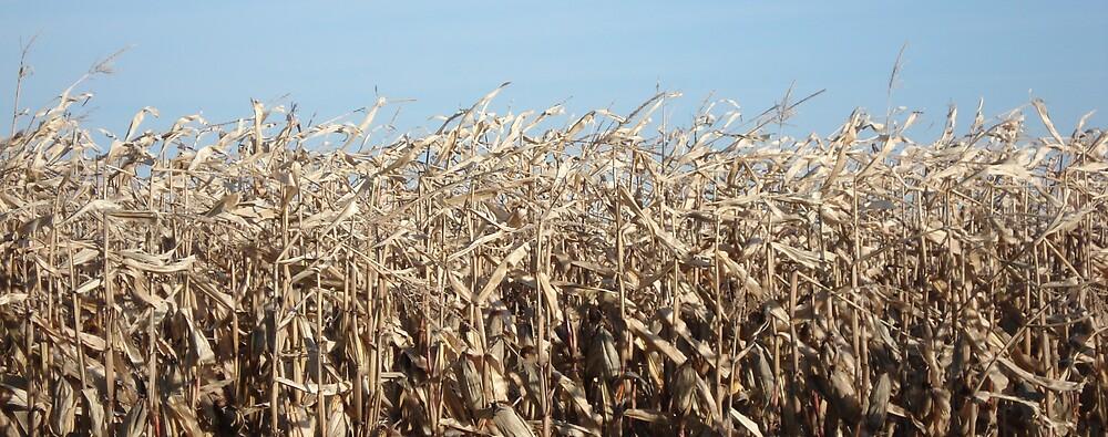 Corn for Harvest by Bill Knapp