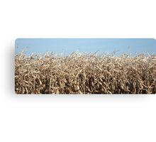 Corn for Harvest Canvas Print