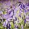 Purple and mauve