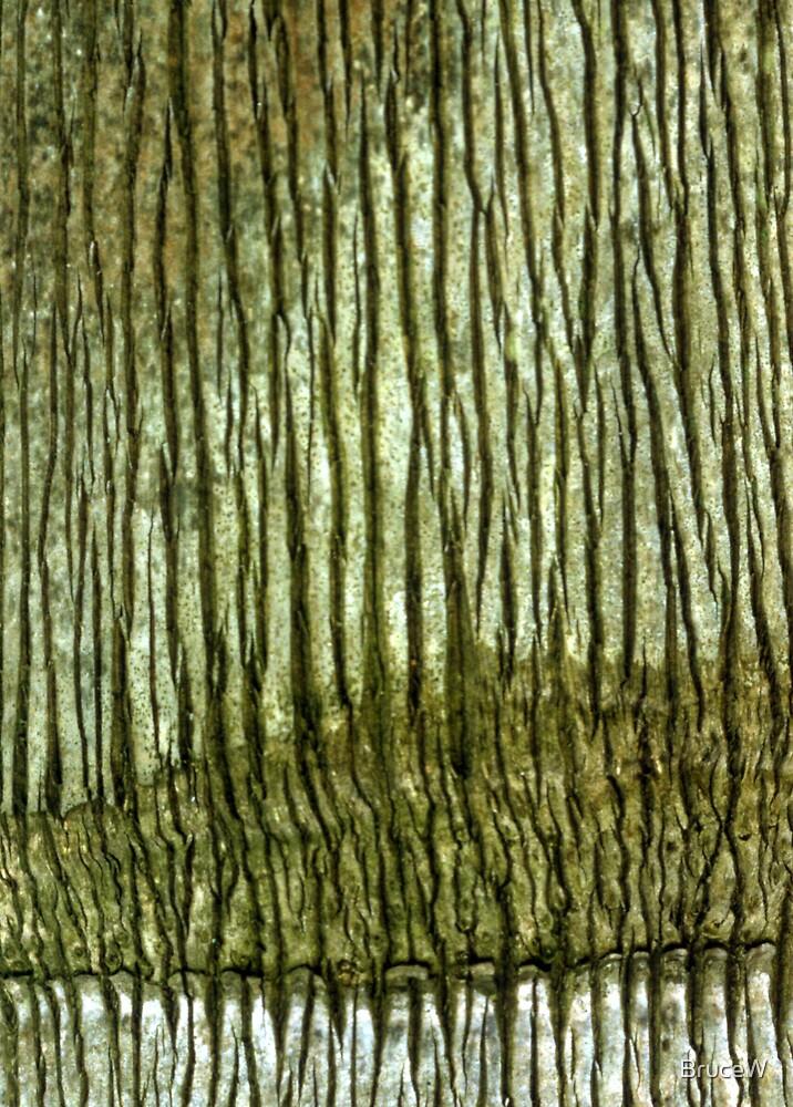 Bark 1 by BruceW