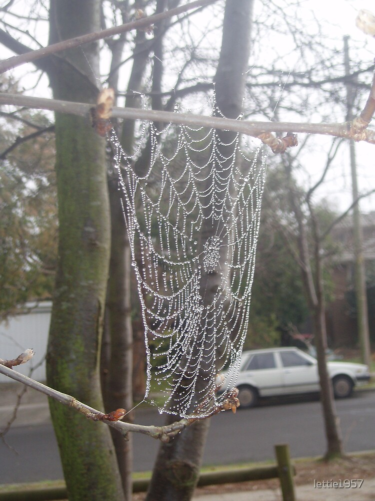 Spiderweb with dewdrops taken in the mist  by lettie1957