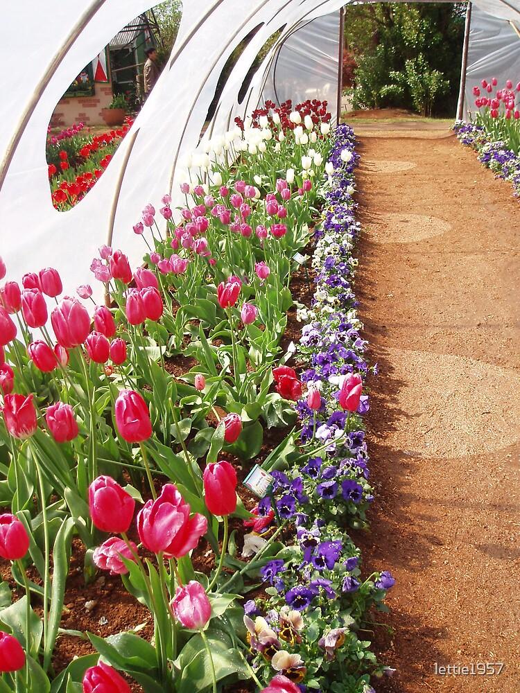 tulips  by lettie1957