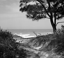 Bradenton Beach Path by beatnik