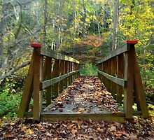 over the bridge thru the woods by Tgarlick