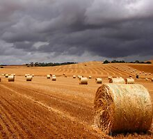 Harvest before the storm by jwwallace