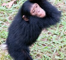 Cheerful Chimp by Michael Clark