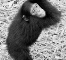 Cheerful Chimp BW by Michael Clark