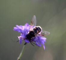 Il fiore e l'ape by Alberto Vivarelli