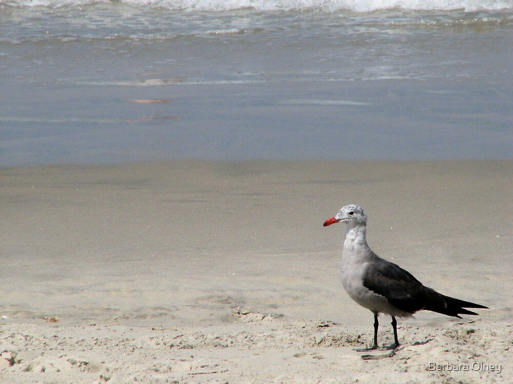 Seagull at beach by Barbara Olney