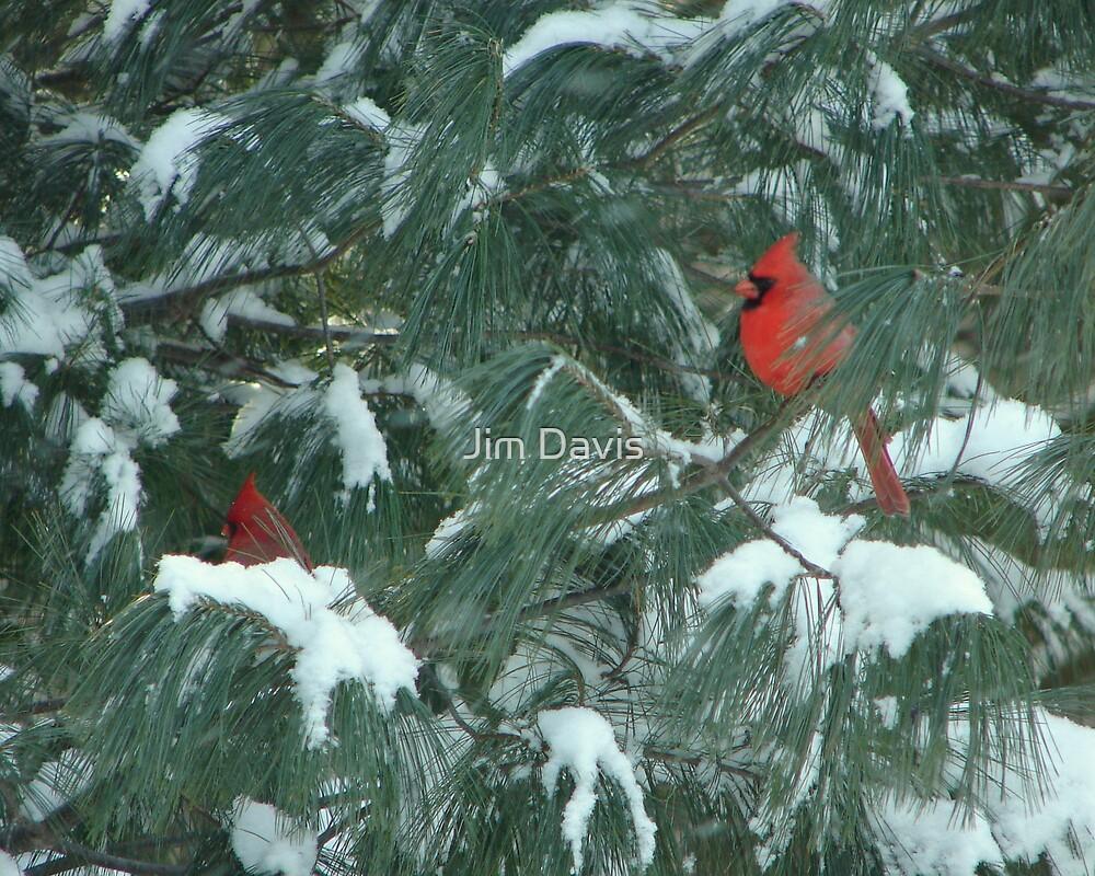 Cardinals by Jim Davis