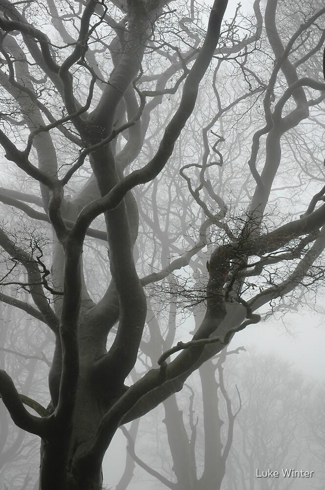 Foggy Trees by Luke Winter