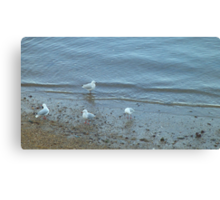 Seagulls at the Seashore Canvas Print