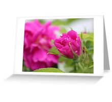"""Let the beauty and fragrance of a rose touch your soul."" Greeting Card"