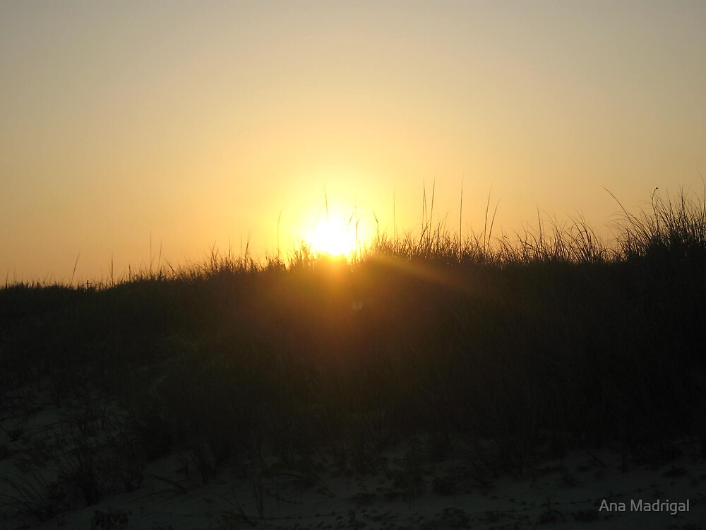 Sun Focus by Ana Madrigal