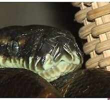 Python Snake by Beccaboo