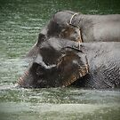 Elephants in the rain 1 by fab2can