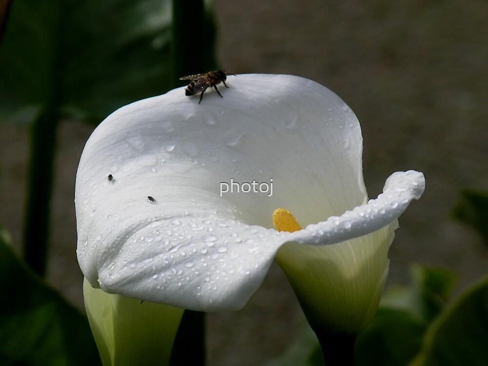 photoj, Flora, fly lilliam by photoj