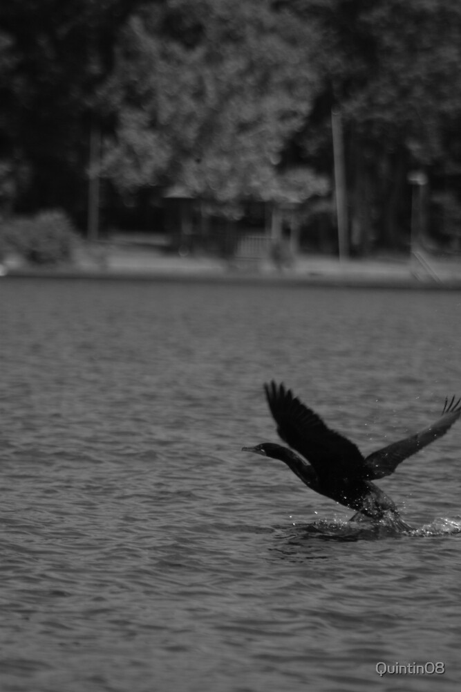 Water Flight by Quintin08