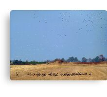 Geese By The Million Canvas Print