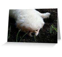 precious petunia Greeting Card