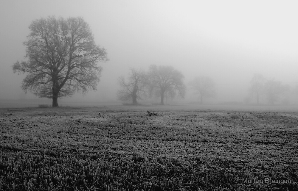 stillness by Murray Breingan