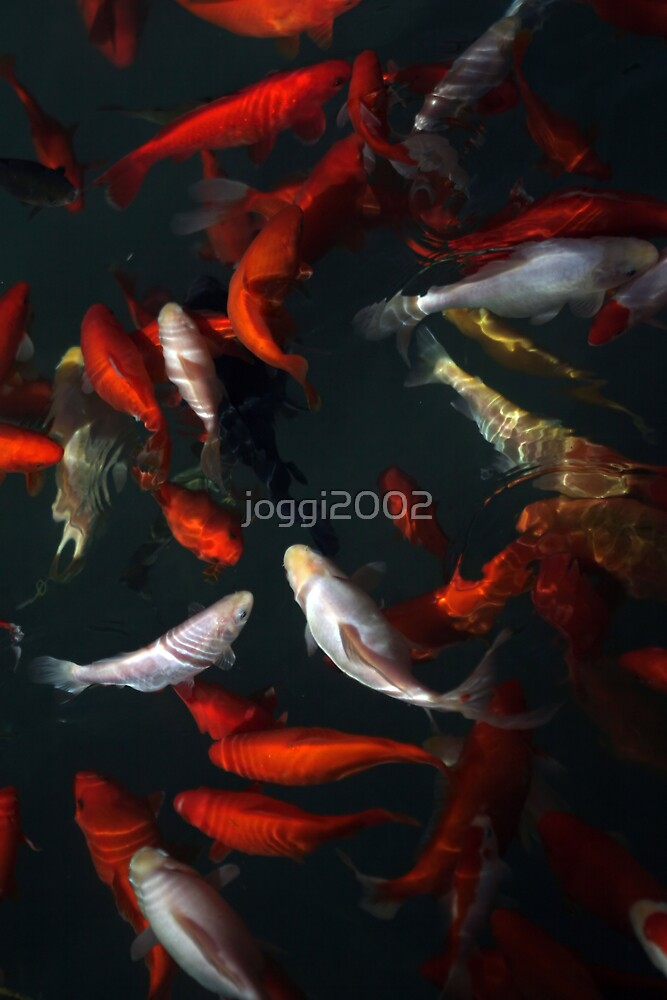 Goldfishes by joggi2002