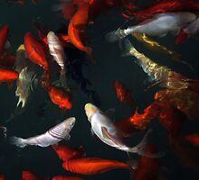 Goldfishes by joggi2002