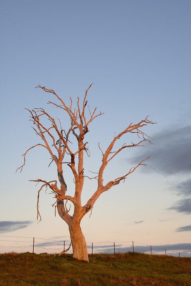 Afterglow by David Haviland